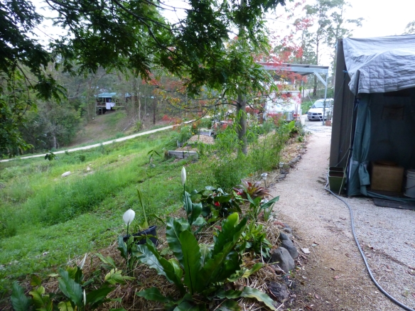 The same walkway today, with crusher dust, rock border, organic hay mulch and a variety of plants to keep the bank intact, and to attract wildlife.